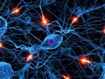 neurona55